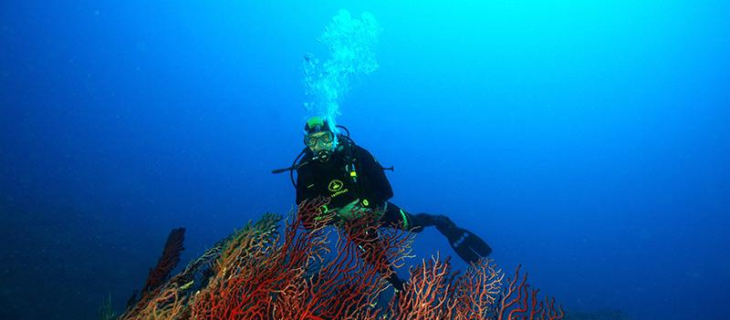 Corsi diving center accademia blu a s d - Dive center blu ...